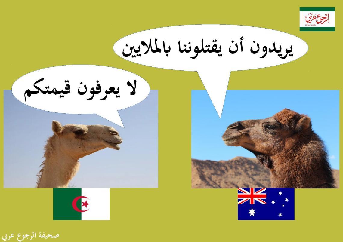 camel_austalia-page-001 (3)